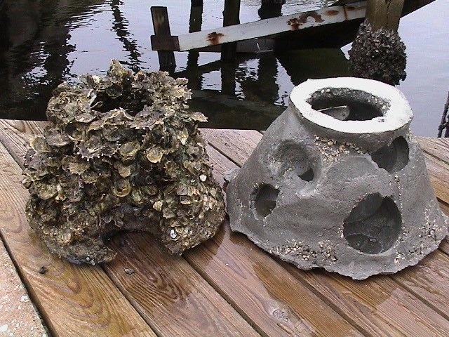 oyster comparison - Copy