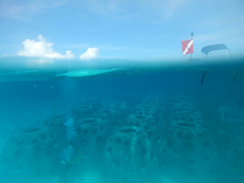 photo by Josh Harwell  with 61 Reef Balls left to deploy